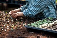 Plantation du légume Images stock