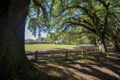 Plantation du sud avec de la mousse pendant des arbres Image libre de droits