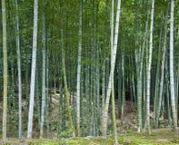 Plantation en bambou image stock