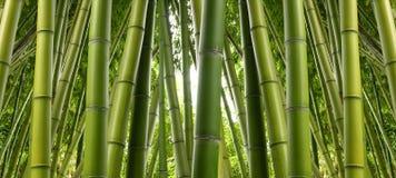 Plantation en bambou Image libre de droits