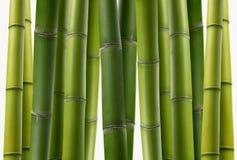 Plantation en bambou Images libres de droits