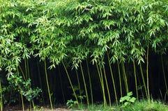 Plantation en bambou Photos libres de droits