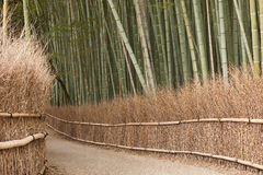 Plantation en bambou, Kyoto Photo libre de droits
