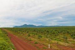 Plantation en caoutchouc photographie stock