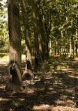 Plantation en caoutchouc Images stock