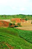 Plantation en Chine Image libre de droits
