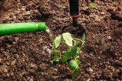 Plantation et arrosage des jeunes plantes Photographie stock libre de droits