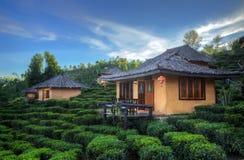 Plantation et hutte de thé dans l'interdiction Rak thaïlandais Image libre de droits