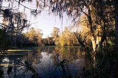 Plantation et jardins de magnolia à Charleston, la Caroline du Sud photo libre de droits