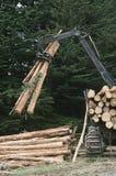 Plantation Eucalyptus (Bluegum) trees being prepared for woodchipping Royalty Free Stock Photos