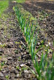 Plantation on a field Royalty Free Stock Photography