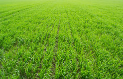 Plantation on field Stock Images
