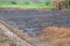 Plantation fields Stock Image