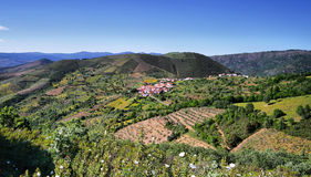 Plantation fields between villages of Sotomayor and Lagunilla Stock Images