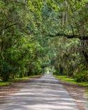 Plantation Gateway Live Oaks royalty free stock photos