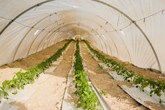 Plantation in a greenhouse stock images