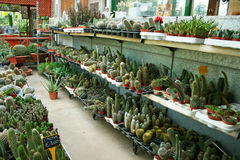 Plantation house royalty free stock photos