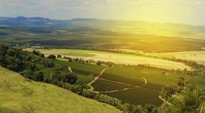 Plantation - lumière du soleil au paysage de plantation de café - Brazi Images stock