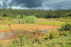 Plantation in Madagascar Royalty Free Stock Photography