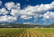 Plantation in Mallorca Stock Photo