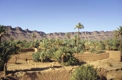 Plantation marocaine de paume Image libre de droits