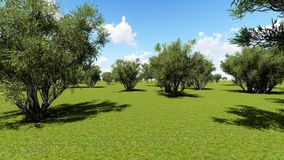 Plantation of olive trees stock footage