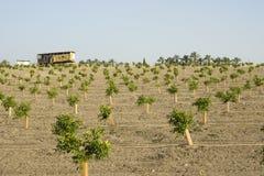 Plantation orange moderne Photo libre de droits