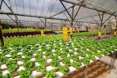 Plantation organique de Hydrophonic images stock
