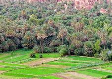 Plantation of palm trees. Stock Photos