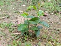 Plantation. Plant green nature natural Royalty Free Stock Image