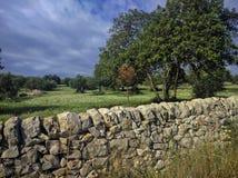 Plantation sicilienne typique d'olivier Images libres de droits