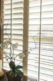 Plantation style wood shutters in new home stock photography