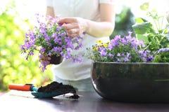 Plantation, travail dans le jardin photo stock