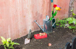 Plantation of tulips Royalty Free Stock Image