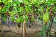 Plantation végétale au Vietnam Images libres de droits