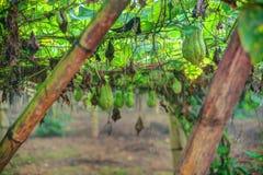 Plantation végétale au Vietnam Photos libres de droits