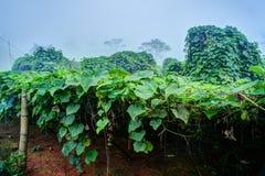 Plantation végétale au Vietnam Photographie stock libre de droits