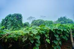 Plantation végétale au Vietnam Photographie stock