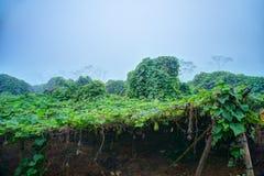 Plantation végétale au Vietnam Image stock