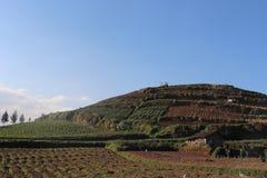 Plantation végétale avec de beaux milieux montagneux image stock