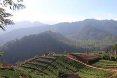 Plantation végétale avec de beaux milieux montagneux photos libres de droits