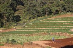 Plantation végétale avec de beaux milieux montagneux images stock