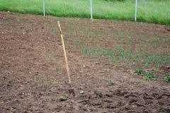 Plantation végétale, pelle en terre Photo stock