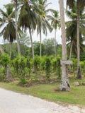 Plantation of vanilla Royalty Free Stock Photos