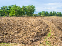 Plantation and vegetable field Stock Image