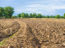 Plantation and vegetable field Royalty Free Stock Images