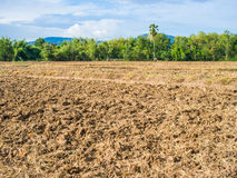 Plantation and vegetable field Stock Images