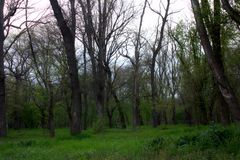 Plantation verte Photo libre de droits
