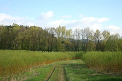 Plantation willow energy Stock Photo