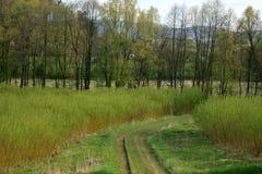 Plantation willow energy Stock Image
